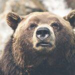 Wat is een bear markt?